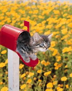 Contact Save Maryland Pets