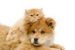cat on dog