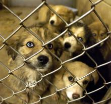 homeless dogs in shelter